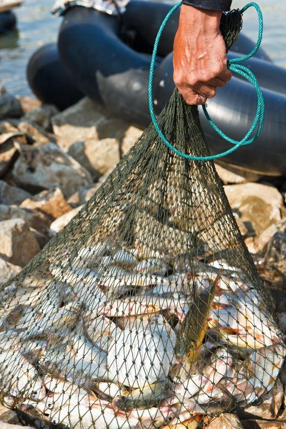 Net Full of Fish