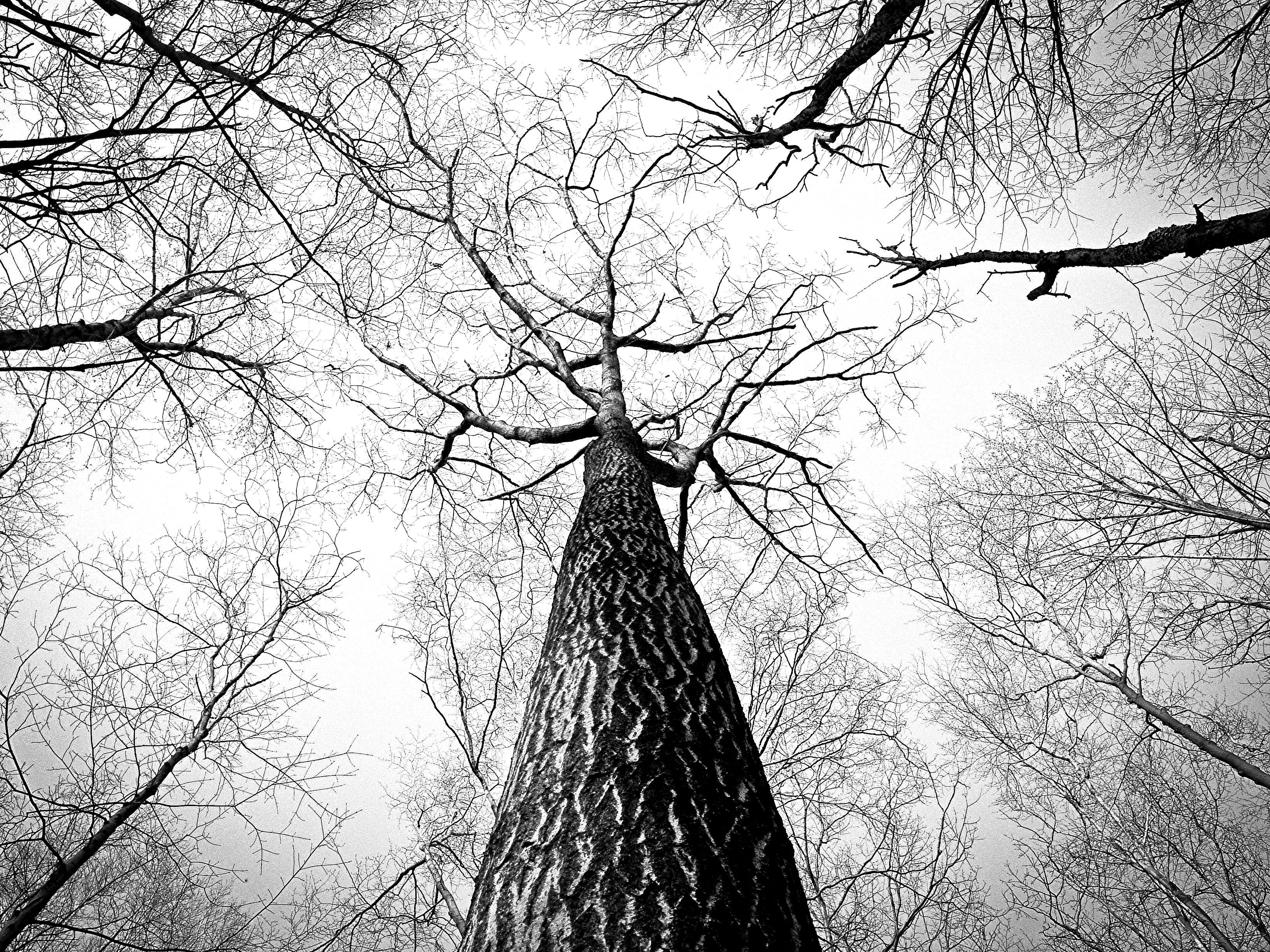 High-Growth-Tree-CoachSME-Blog